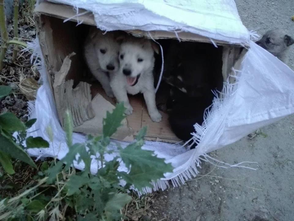 В Мелитополе беспомощных животных пытались похоронить заживо, фото-6, Фото из открытого доступа