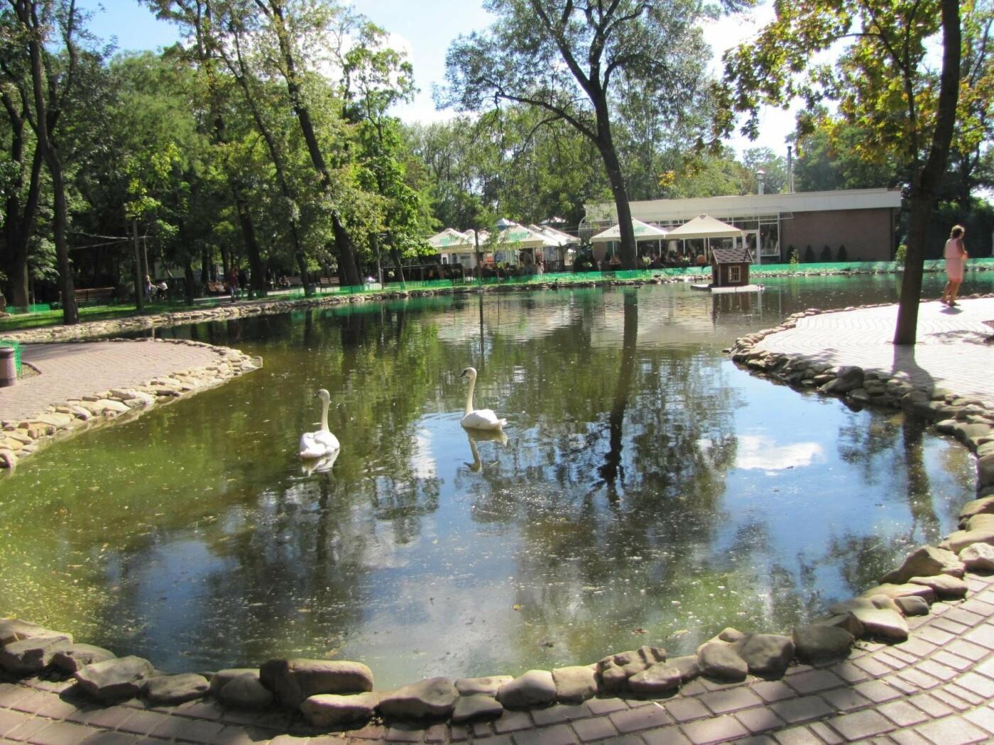 Мелитопольский парк: от первого саженца до современного пруда, фото-19