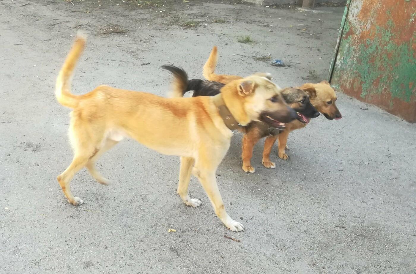 """Как изменилась жизнь собак в мелитопольском приюте """"Надежда"""", - ФОТО, фото-2"""