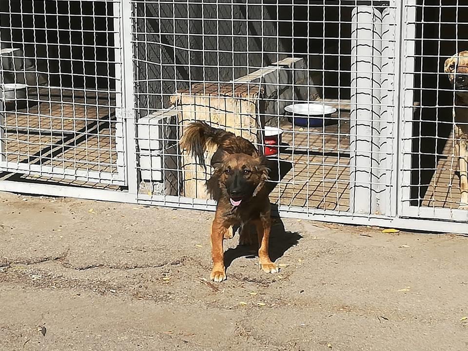 """Как изменилась жизнь собак в мелитопольском приюте """"Надежда"""", - ФОТО, фото-3"""