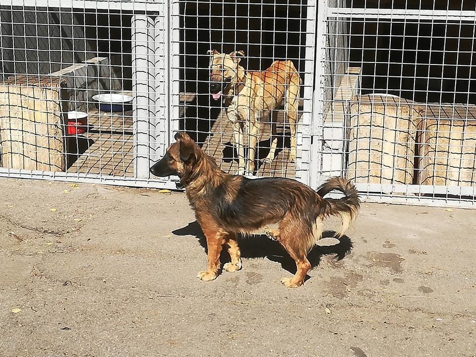 """Как изменилась жизнь собак в мелитопольском приюте """"Надежда"""", - ФОТО, фото-4"""