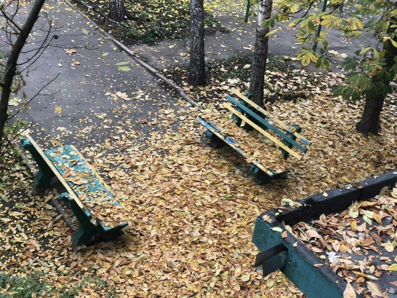 Мелитопольцы показали яркие фото утреннего листопада , фото-1, Фото сайта 0619