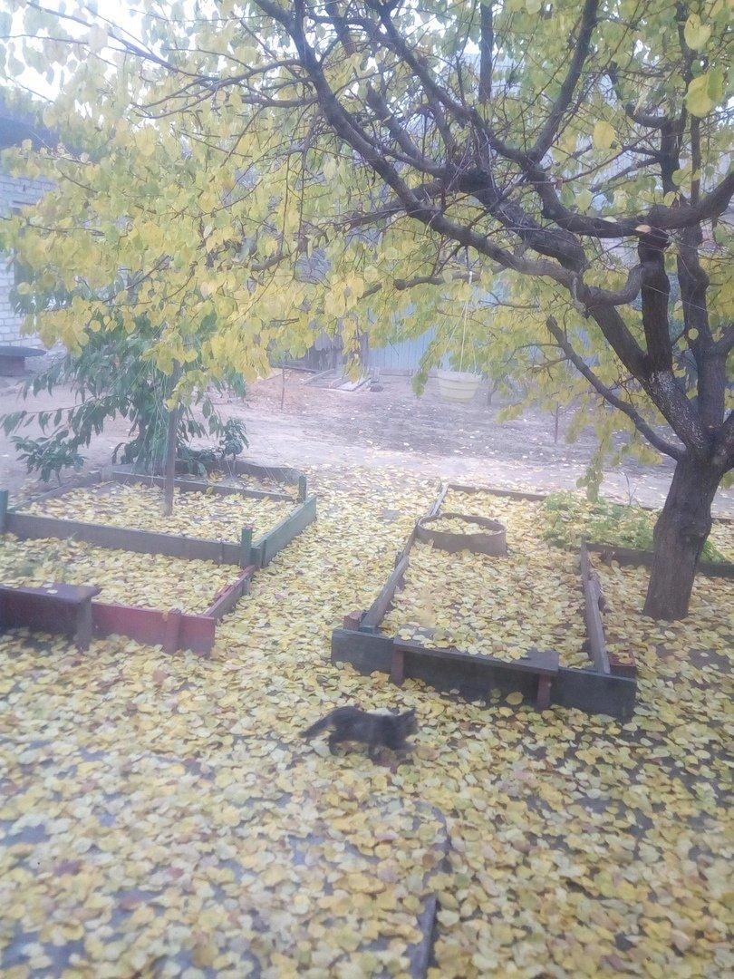 Мелитопольцы показали яркие фото утреннего листопада , фото-4