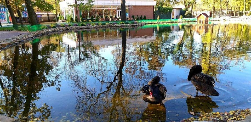 В сети показали фото осеннего пруда в мелитопольском парке, фото-2
