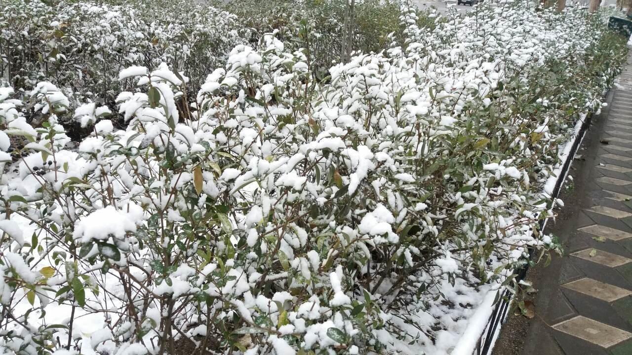 В Мелитополе выпал первый снег, фото-2, Фото 0619