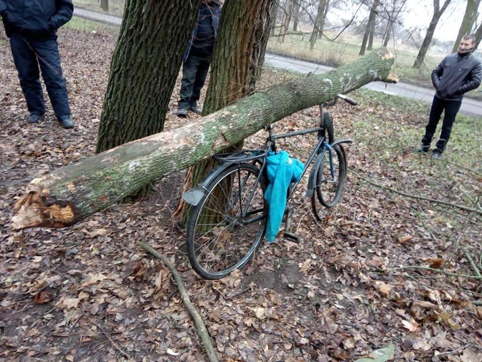 В Мелитопольском районе задержали мужчину, срубившего дерево в центре села , фото-2
