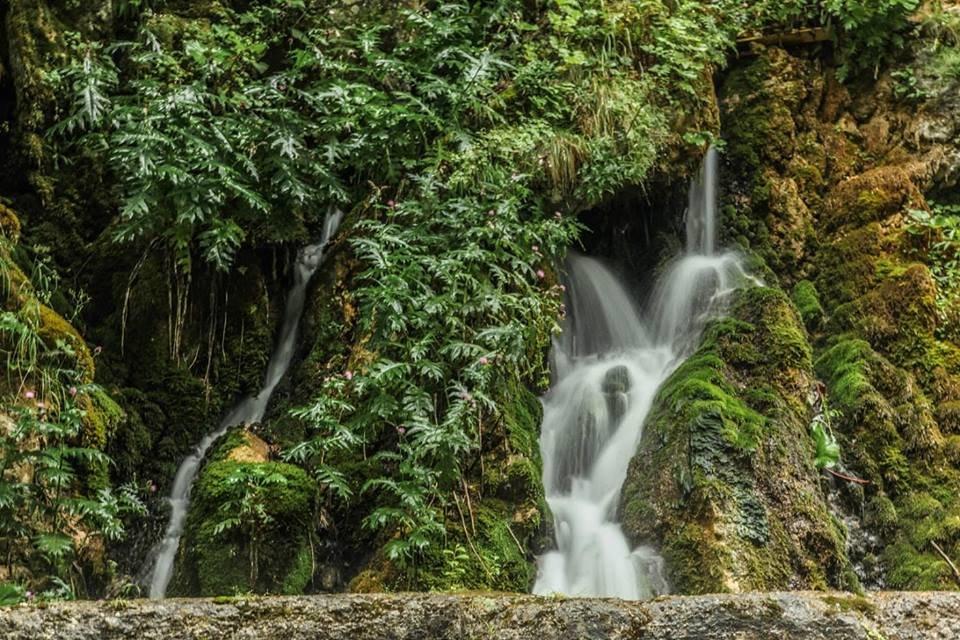 Любите природу и парки? Вас ждет зеленая Черногория!, фото-8