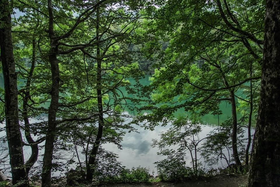 Любите природу и парки? Вас ждет зеленая Черногория!, фото-9