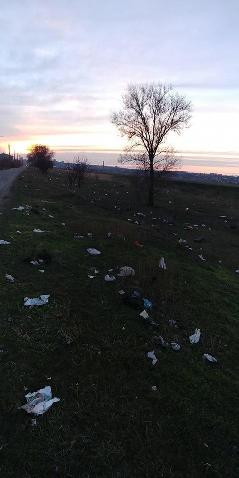 В Мелитопольском районе зеленую зону превратили в свалку , фото-1