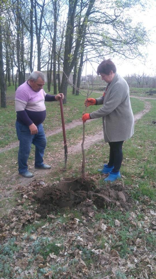 В селе под Мелитополем высадили полтысячи деревьев , фото-3
