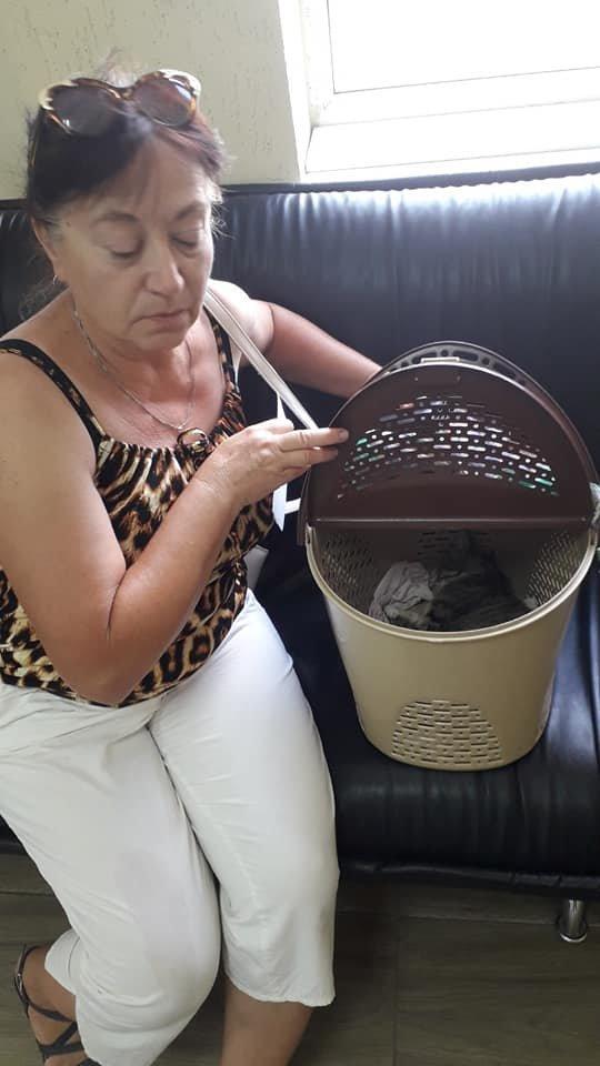 В Мелитополе продолжают стерилизовать животных по социальным ценам , фото-5