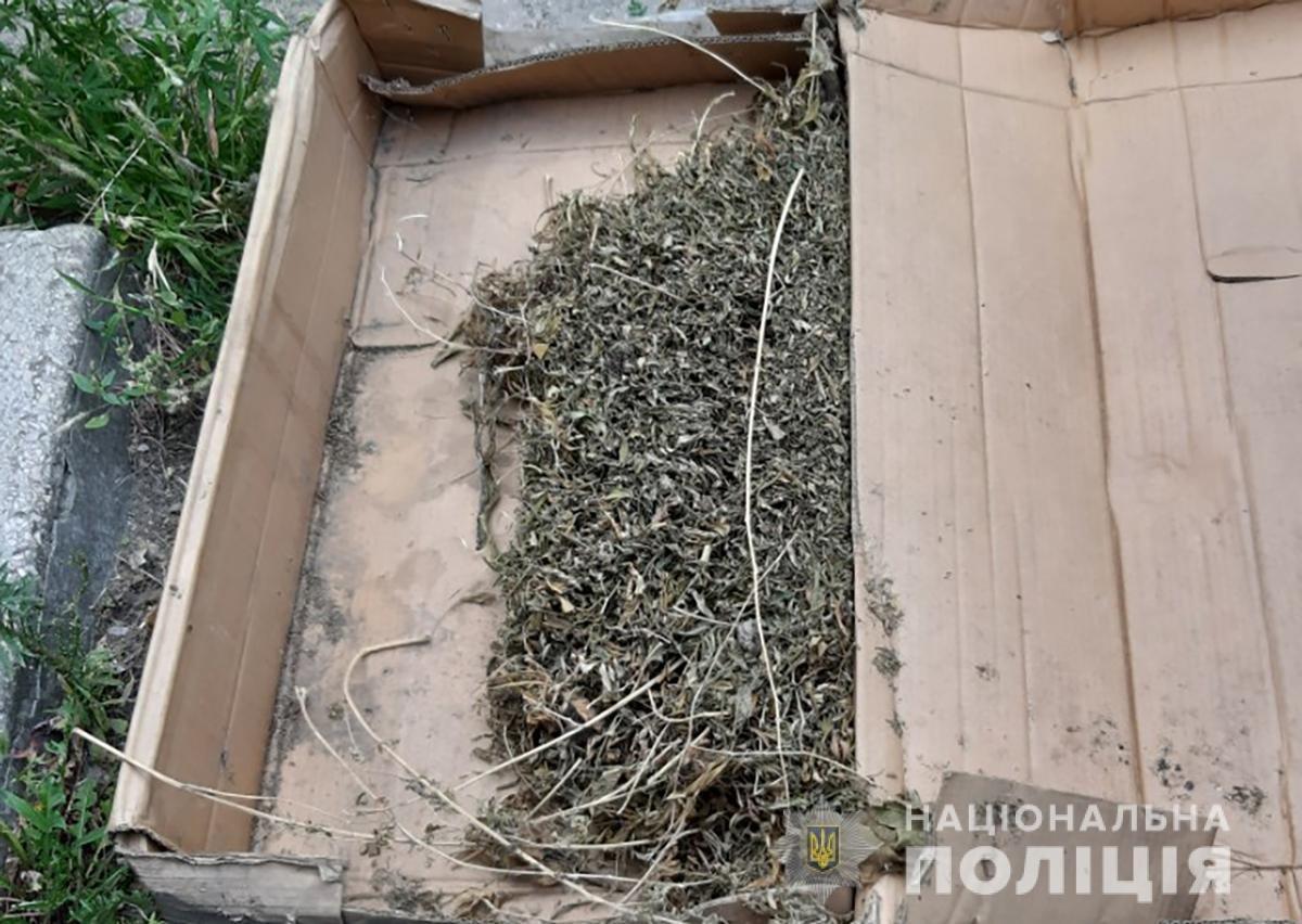 В Мелитополе полицейские изъяли более 60 кустов конопли, фото-1
