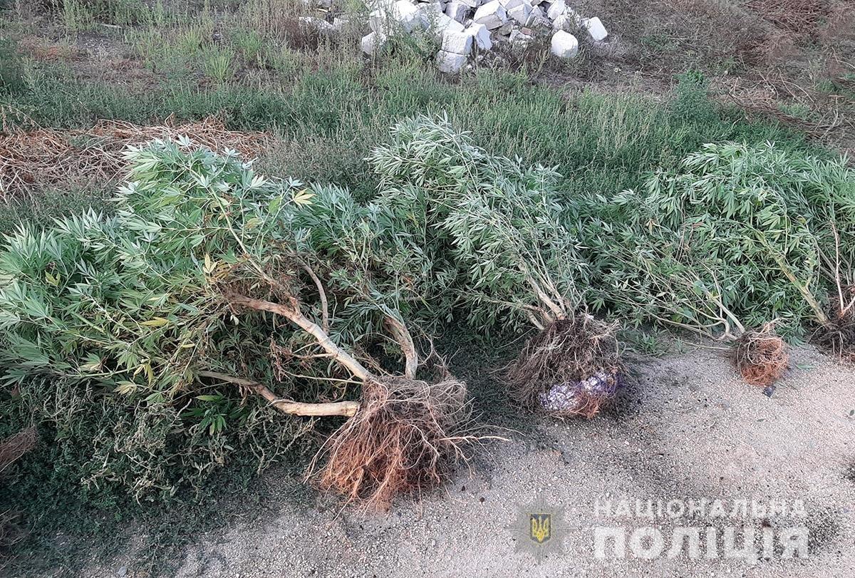 Мелитополец выращивал коноплю и хранил сухой канабис, фото-3