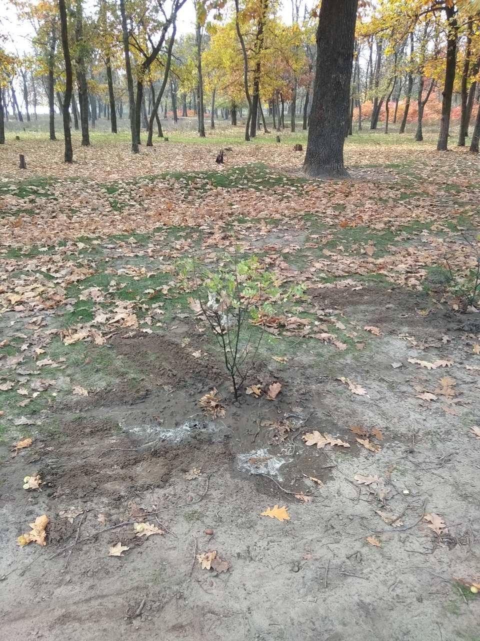 В мелитопольском лесопарке высадили более 100 молодых деревьев, фото-2