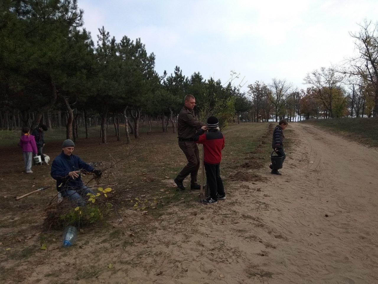 В мелитопольском лесопарке высадили более 100 молодых деревьев, фото-9