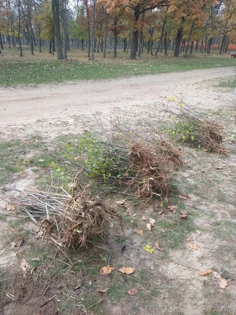 В мелитопольском лесопарке высадили более 100 молодых деревьев, фото-4