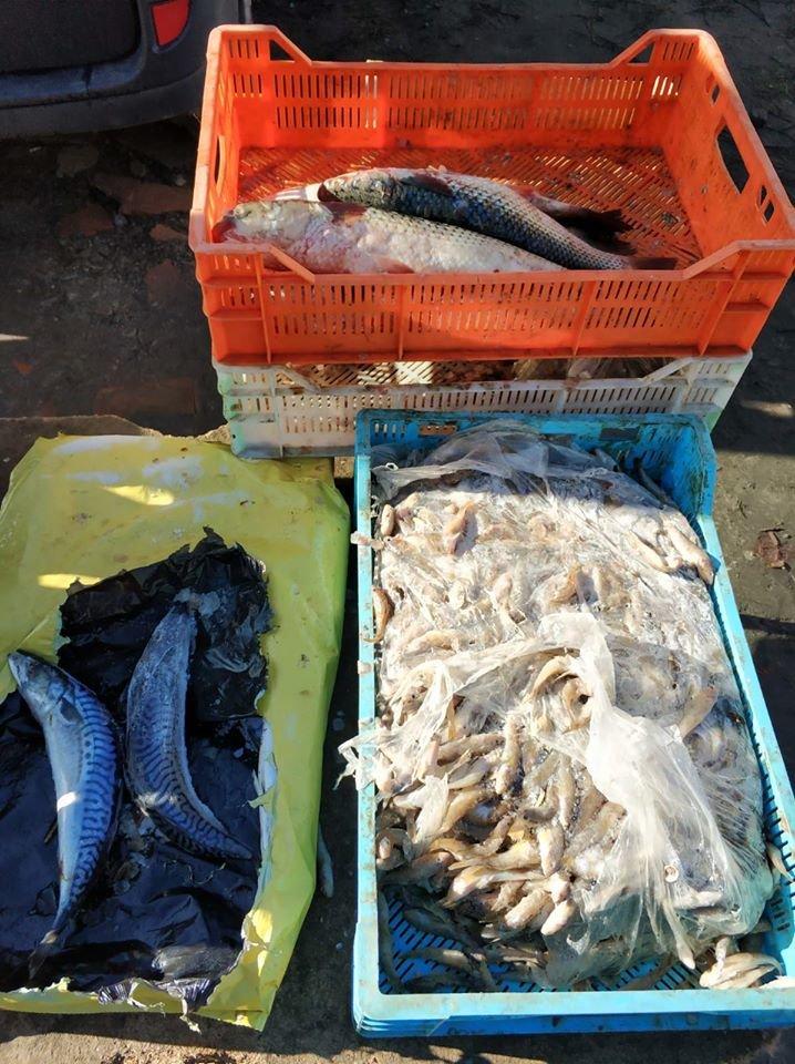 У Мелітополі зафіксували незаконну торгівлю, - ФОТО, фото-2