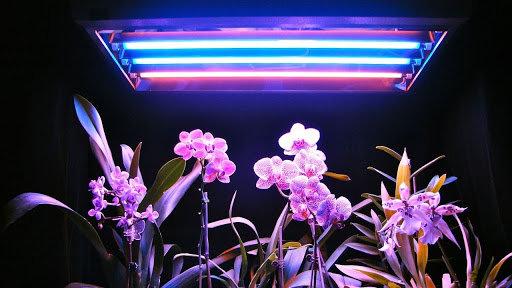 Как правильно выбрать освещение для ростений, фото-1