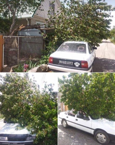 Из-за сильного ветра в Мелитополе падают деревья, фото-1