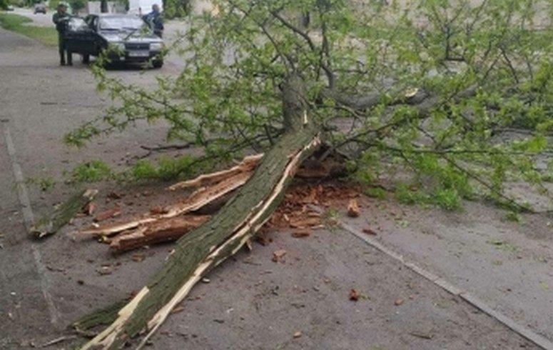 Из-за сильного ветра в Мелитополе падают деревья, фото-2