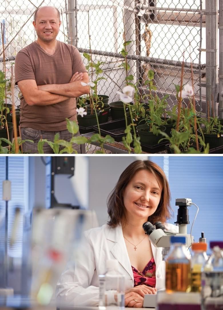 Вчені запропонували лікувати COVID-19 марихуаною, фото-1