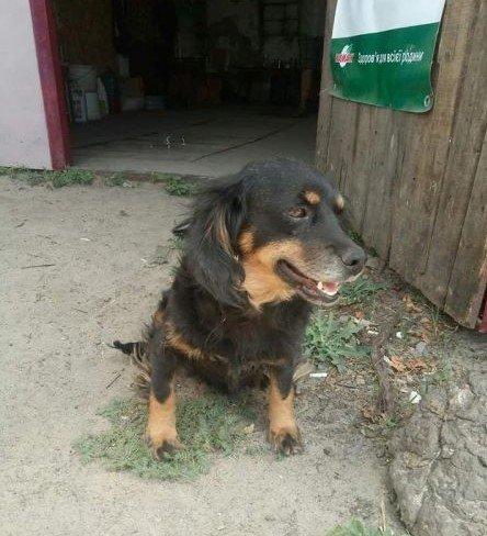 В Мелитополе собачка, пережившая травлю, ищет новых хозяев, фото-1