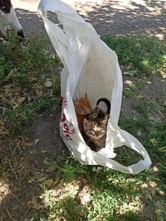 В Приморске выбросили двухмесячных котят в пакете на мусорку, фото-1